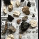 溶岩石 金魚