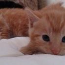 かわいい猫です