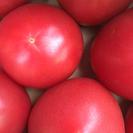 とまと大阪の矢田駅前店トマト激安‼︎