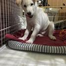 生後3ヶ月の柴mix犬雄です❗️