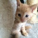 ノラ猫ちゃんが 赤ちゃんを産みました