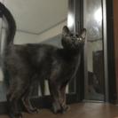 三匹の猫の里親を探しています