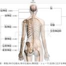 肩こりの原因は猫背です❗️本気で治したい凝りと痛み(25年の実績)