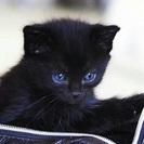 ノラ猫ちゃんが産みました。