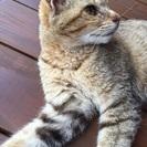 1歳の可愛い猫です