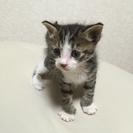 生後約1ヶ月の子猫です。