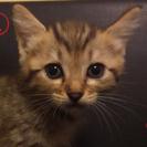 ①~④検討中につき一時募集中止 5月10日に生まれた仔猫ちゃんの里...