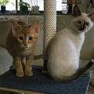 3ヶ月ぐらいの仔猫たちです♪
