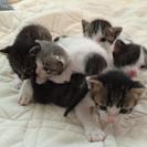 一ヶ月の仔猫6匹