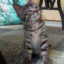 保護した子猫約2ヶ月です