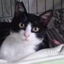 【急募】飼主さん 募集:保護猫オス/1歳未満去勢済/ご機嫌猫くん