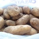 虫食いあり 小~大サイズ ジャガイモ約3.5㎏