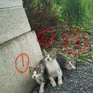 7/26更新 子猫の里親さん募集です