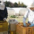 有機野菜等の収穫・選果場スタッフ募集
