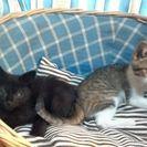 3ヶ月くらいの子猫