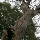 木登りをしたい、ちょっと感覚のズレている人あつま〜れ!笑