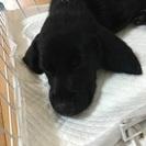 5月16日生まれの子犬♡オス