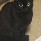 『里親さん決まりました』黒ネコ1才女の子