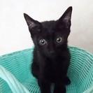 黒猫ちゃん 3ヶ月くらい