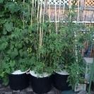 水耕栽培に使ってた樽★まだ有ります。