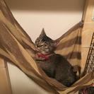 一歳のメス猫の里親募集
