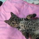野良猫を減らす為の不妊手術へのお手伝い