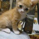 四か月:膝乗り泣きべそ顔手袋子猫
