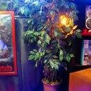 中古-光触媒人工観葉植物