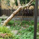 最終価格。さるすべりの木