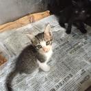 雄猫6月13日生まれ計5匹