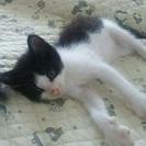 1~2ヶ月の仔猫の里親会を開催します。7月30日(土)14時~17時。