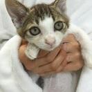 スリゴロ!人慣れ抜群のキジ白子猫ちゃん、ド~くん♪