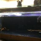 熱帯魚 大型魚 水槽セット安く出します
