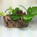 観葉植物鉢