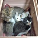 1か月半~3か月半までの子猫が12匹います!!