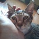4~5ヶ月の可愛い子猫の家族になってください