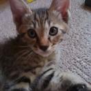 4月15日生まれの子猫ちゃんです!