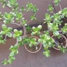 「無料」観葉植物一式