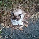 人懐こい猫達一度みに来てください!! 公園にいる成猫達ですが。。。...