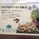 ピクニカ レジャーセット/弁当/ピクニック/ランチ