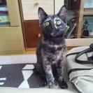 サビ模様が可愛い子猫