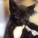 7月上旬生まれの子猫5匹