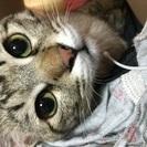 猫の貰い手を探しております。