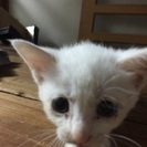 白猫さんです