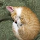 生後1ヶ月、子猫2匹 、