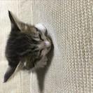 赤ちゃん猫 生後1か月半