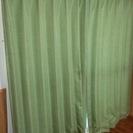 ♡グリーンカーテン(レースつき)♡