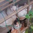 白ネコちゃん、誰かネコ可愛いがってくれる方探しています