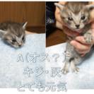8/4生まれの子猫4匹