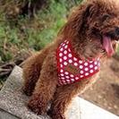 ペット ハーネス 犬 用品 猫  かわいい 小型犬 お出かけ 散歩...